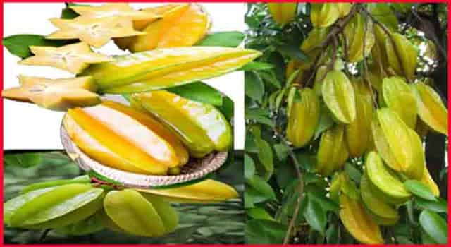 कमरख या स्टार फ्रूट खाने के फायदे - Star Fruit HEALTH Benefits And Side Effects In Hindi.